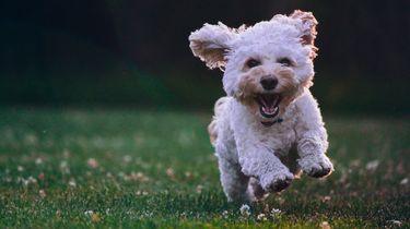 110. Gezondheidscontrole + vaccinatie van uw huisdier
