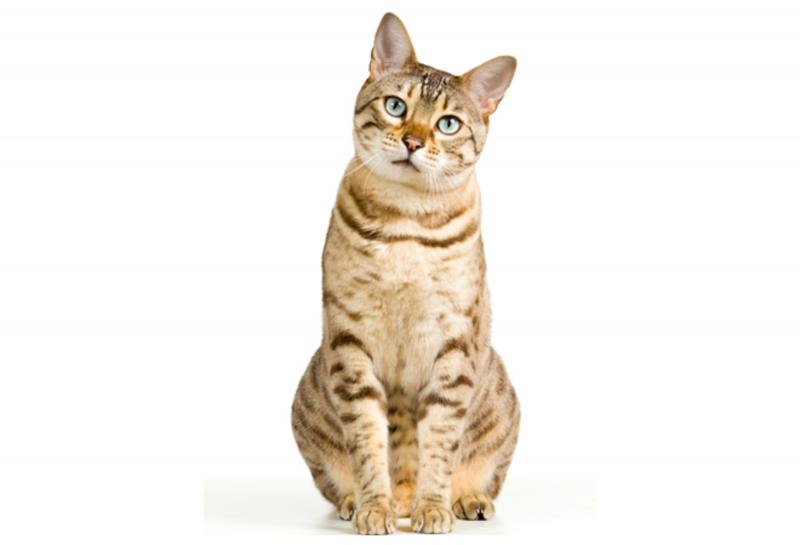 61. Diervoederpakket Kat